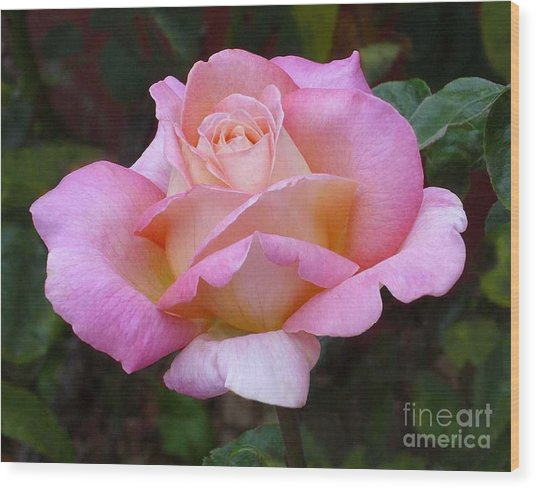 Valentine Pink Rose Wood Print