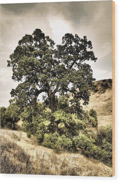 Valley Oak Wood Print