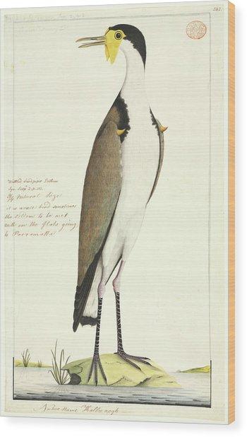 Vanellus Miles Wood Print