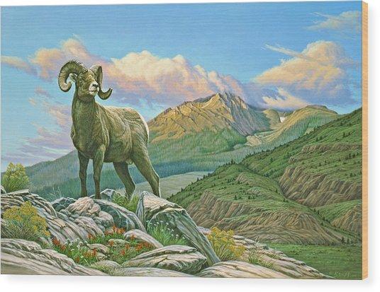 Vantage Point - Bighorn Wood Print by Paul Krapf