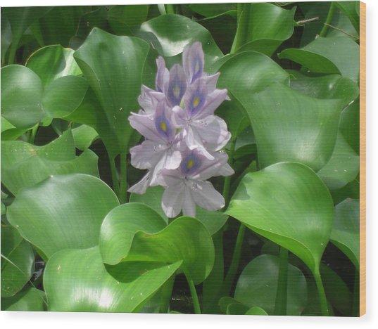 Variations Of Violet Wood Print by John Wilson