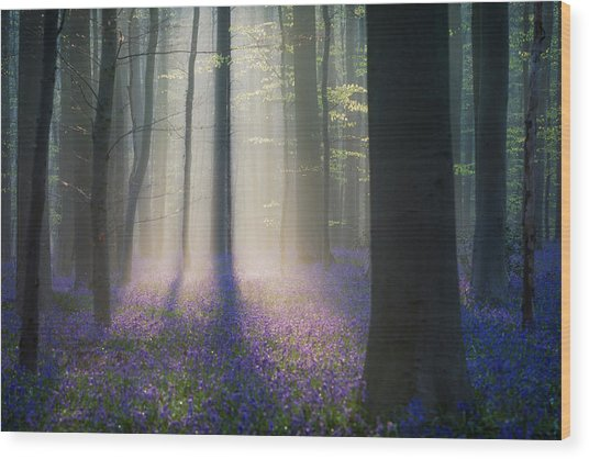 Velvet Light Wood Print