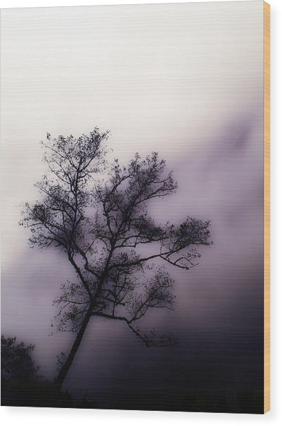Velvet Mist Wood Print