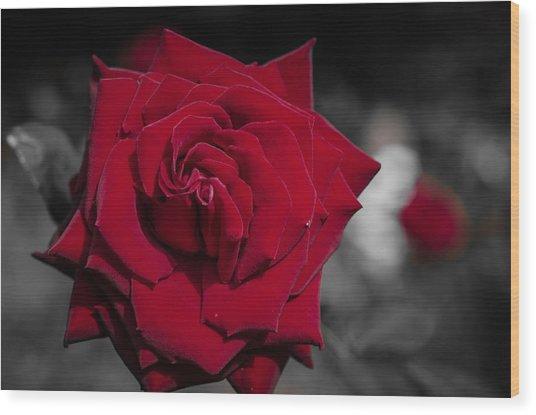 Velvet Rose 2 Wood Print