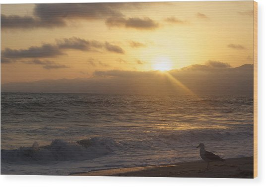 Venice Beach Sunset Wood Print by Rollie Robles