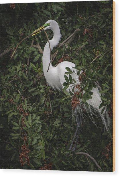 Venice Rookery Egret Wood Print