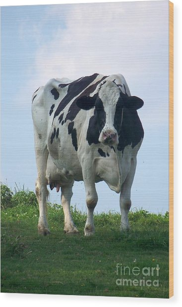 Vermont Dairy Cow Wood Print