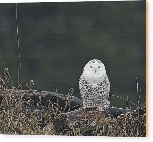 Vermont Snowy Owl Wood Print
