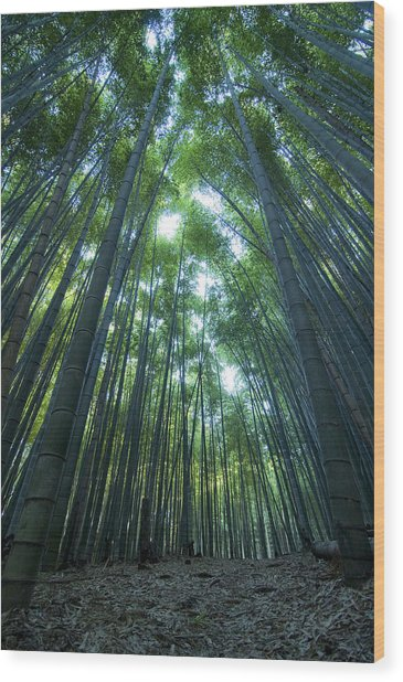 Vertical Bamboo Forest Wood Print