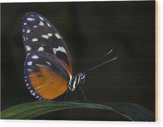 Vibrant Beauty Wood Print