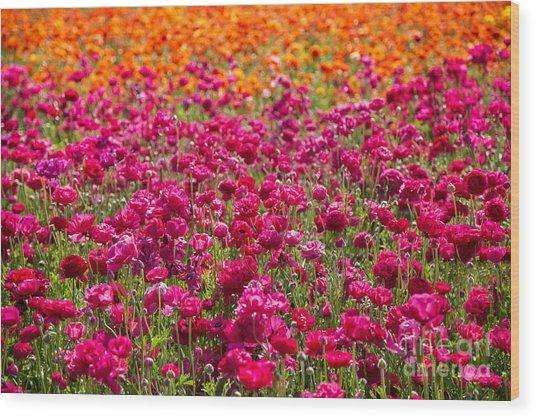 Vibrant Flower Field Wood Print by Julia Hiebaum