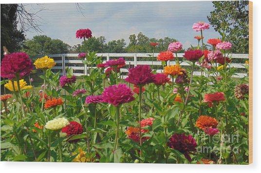 Vibrant Zinnia Garden Wood Print