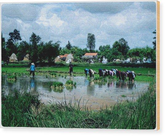 Vietnam Mekong Delta Wood Print