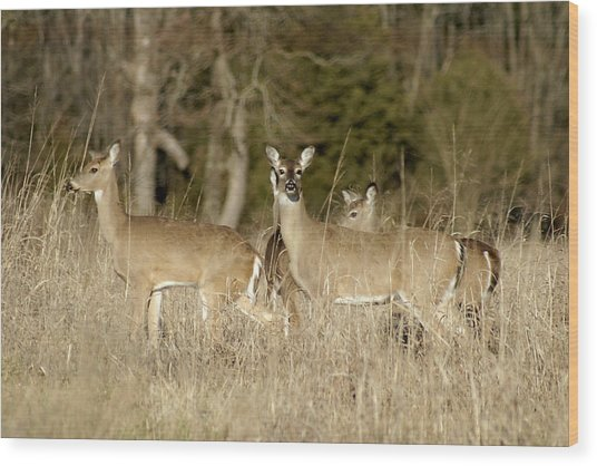 Vigilant White-tailed Deer Wood Print
