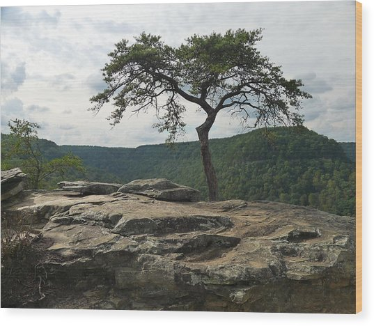 Vignette At Buzzards Roost Wood Print