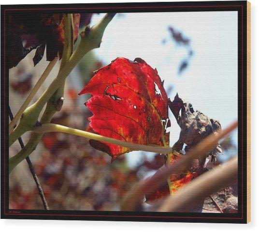 Vine Leaf At Fall. 02 Wood Print by Arik Baltinester