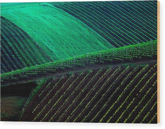 Vineyard 05 Wood Print
