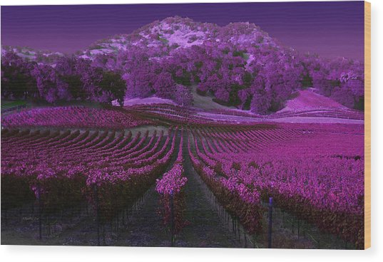 Vineyard 41 Wood Print