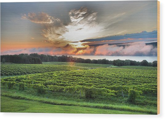 Vineyard At Sunrise Wood Print