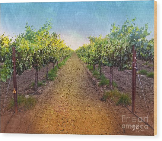 Vineyard Road Wood Print