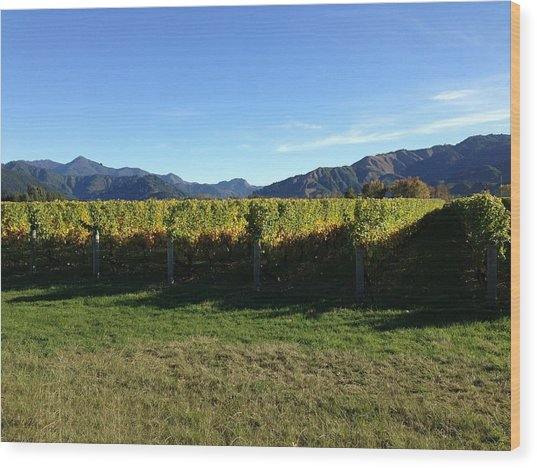 Vineyard Wood Print by Ron Torborg