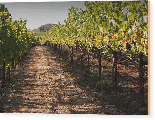Vineyard Soil Of Sonoma Wood Print by Kent Sorensen