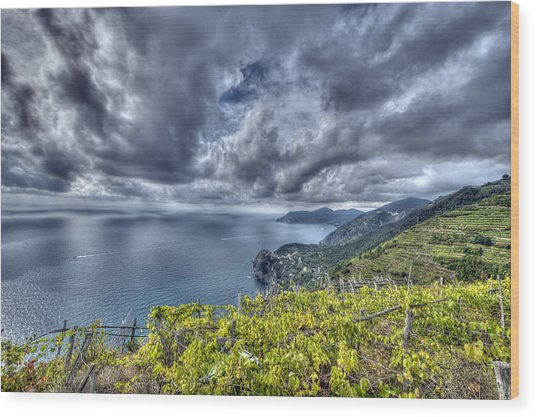 Vineyards Above Cinque Terre Wood Print