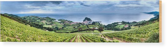 Vineyards By The Sea Wood Print