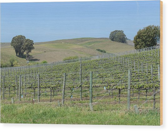 Vineyards In Napa Valley California Wood Print