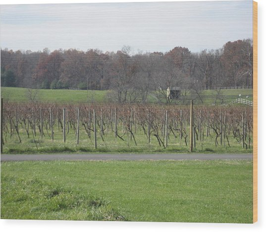 Vineyards In Va - 121234 Wood Print by DC Photographer