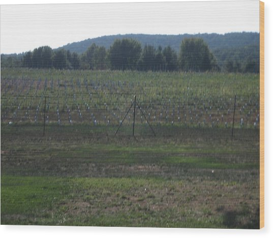 Vineyards In Va - 121255 Wood Print by DC Photographer