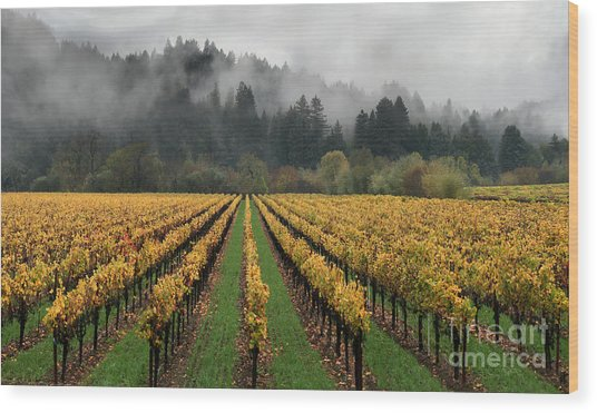 Vineyard Russian River Wine Country Sonoma County California Wood Print