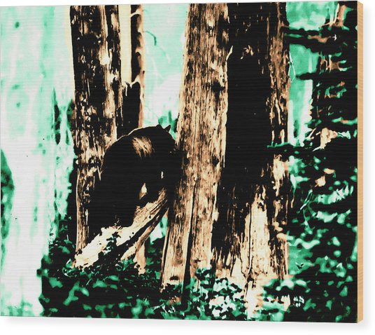 Vintage Bear In The Mount Rainier Forest Early 1900 Era... Wood Print