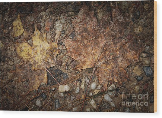 Vintage Maple Leaf Wood Print by Jolanta Meskauskiene