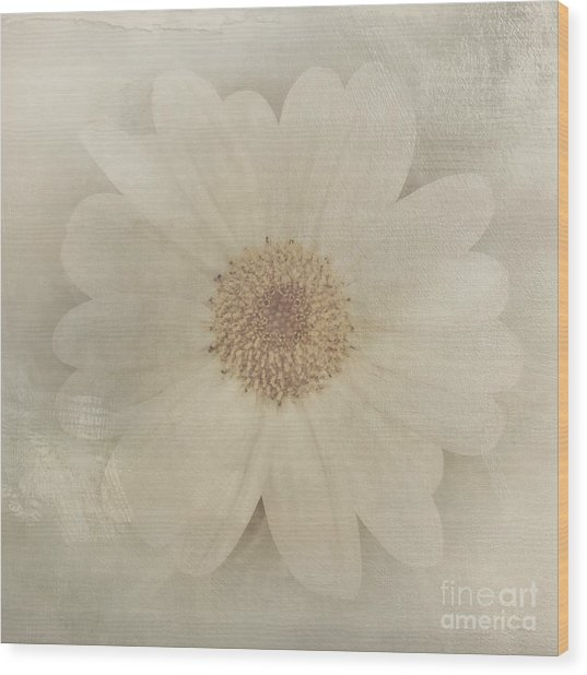 Vintage Painterly White Daisy  Wood Print