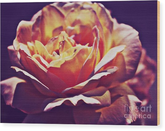 Vintage Rose Wood Print by Judy Palkimas