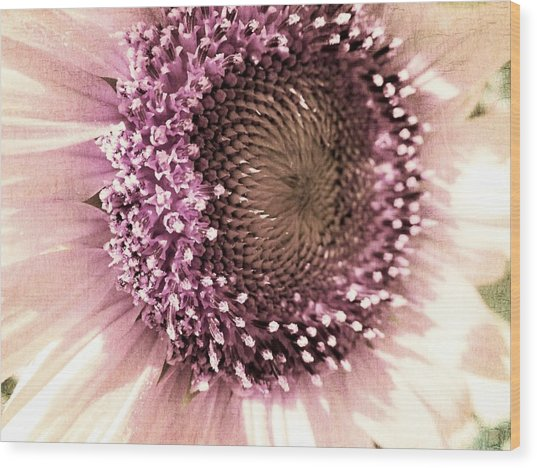Vintage Sunflower  Wood Print