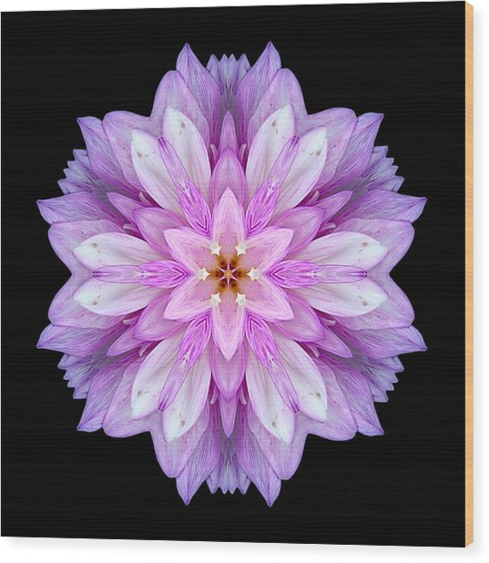 Violet Dahlia I Flower Mandala Wood Print