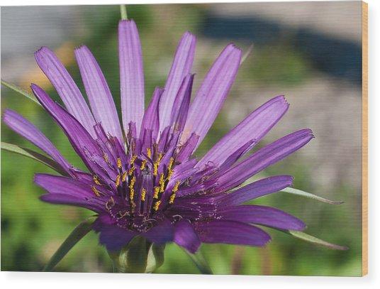 Violet Flower Wood Print by Carlos V Bidart