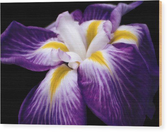 Violet Iris Wood Print