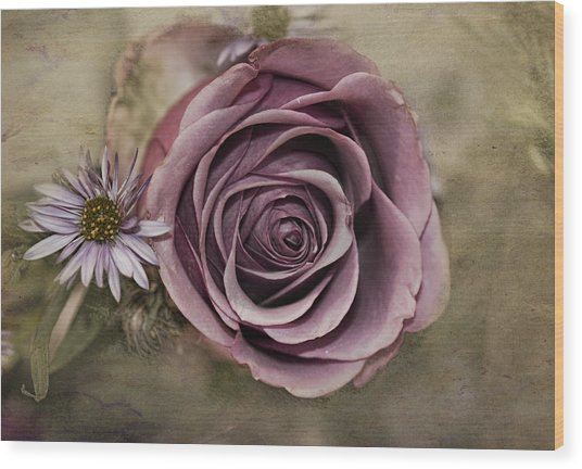 Violet Rose  Wood Print