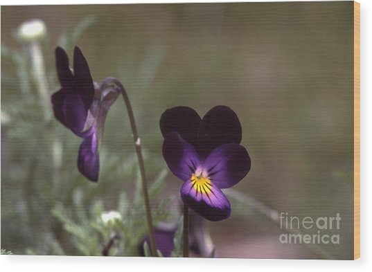 Violets -33 Wood Print by Stephen Parker