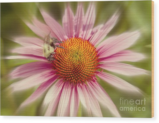 Vip Very Important Pollinator Wood Print