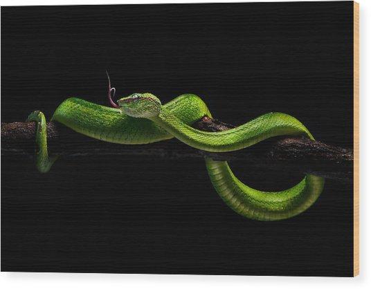Viper One Wood Print