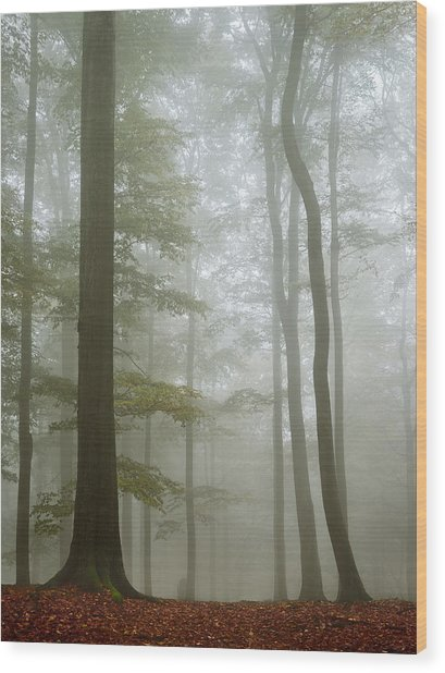 Visible Invisibility Wood Print
