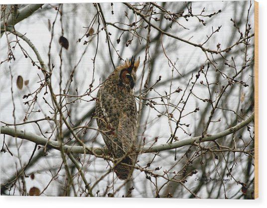 Visiting Owl 2 Wood Print by Rebecca Adams