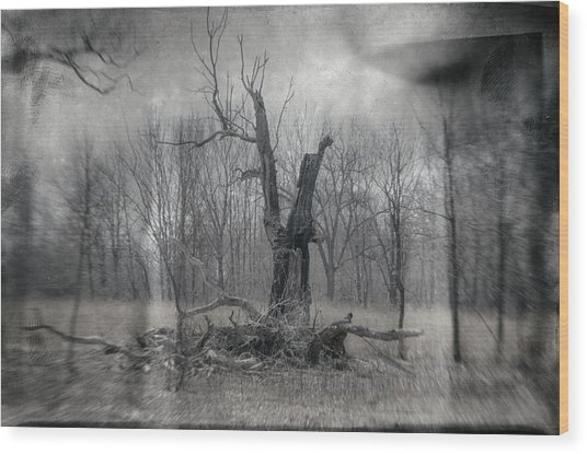 Visitor In The Woods Wood Print