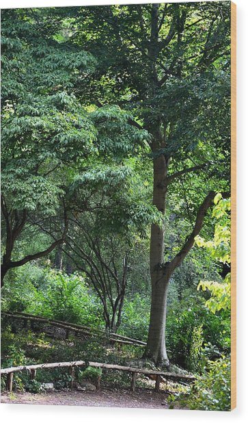 Vivacious Wood Print