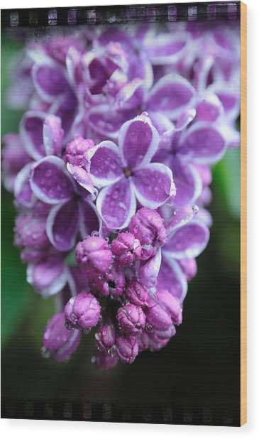 Vivid Lilac Wood Print
