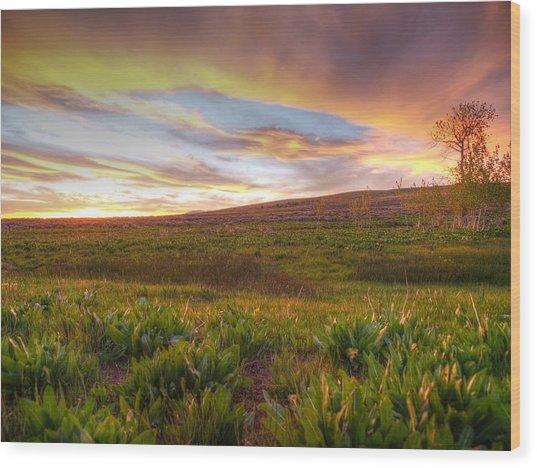 Vivid Sunset Wood Print